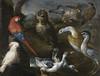 [ B ] Bartolomeo Bimbi - Exotic birds from the aviaries of Grand Duke Cosimo III de' Medici in a landscape by Cea.