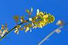 Mustard - Irvine Regional Park