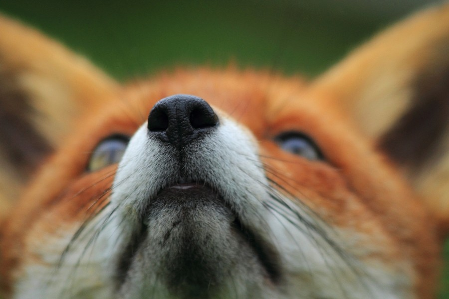 Flo's nose