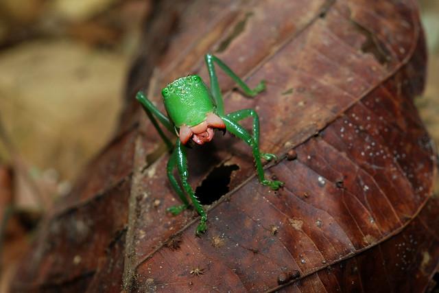 """Una selva poblada de criaturas """"extrañas"""" en Ecuador"""