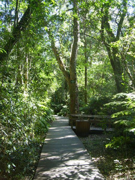 Garden Of Eden Knysna Flickr Photo Sharing