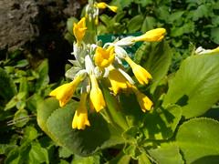 110417_BotanischerGarten 068