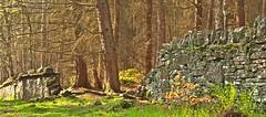 pmurray broken wall at fernilee woods