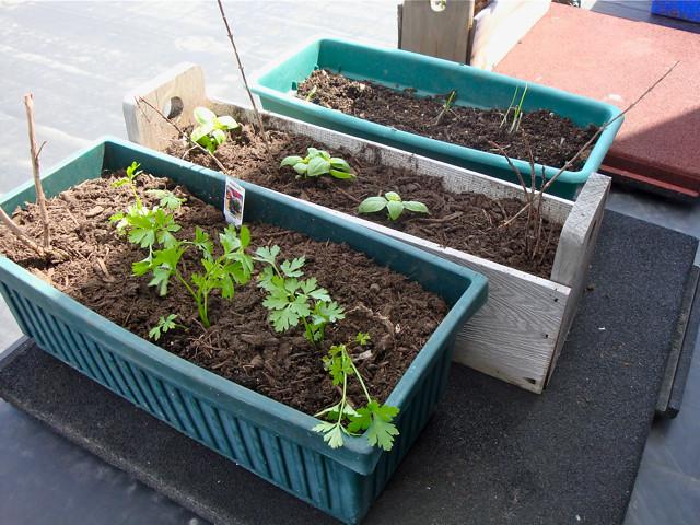 Rooftop Vegetable Gardens : Rooftop Vegetable Garden  Flickr - Photo Sharing!
