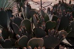 desert_botanical-9