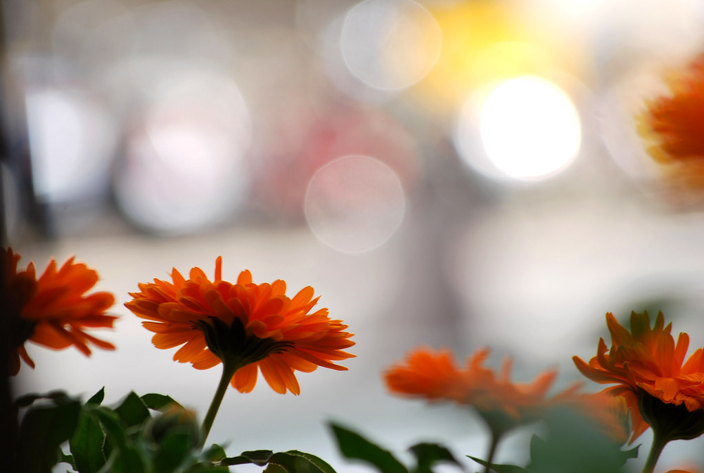 Good morning bokeh