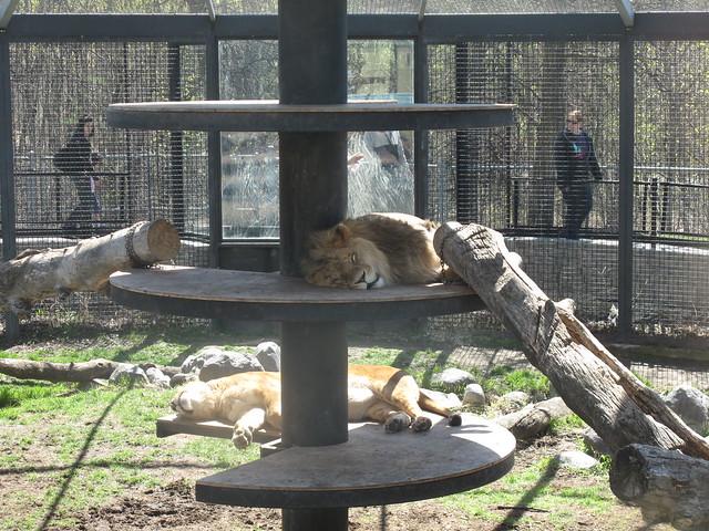 Foyer Museum Zoo : Winnipeg zoo museum flickr photo sharing