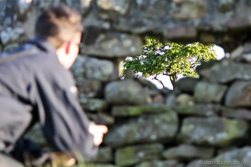 tree rock stone wall view stones dry away through distance far drystone distant