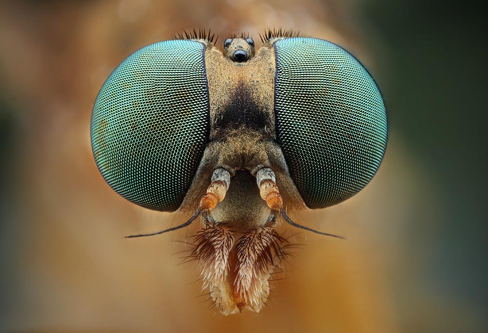 75+ Amazing Retina HD Macro Photography Of Bugs World