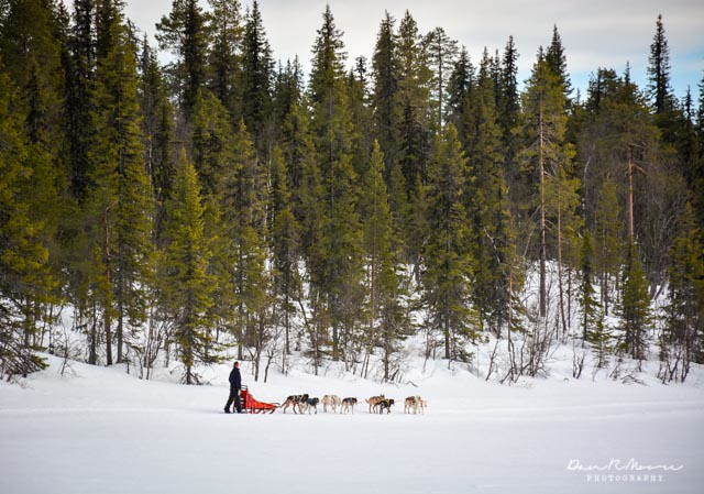 A Day of Husky Dog Sledding - Dog Sledding