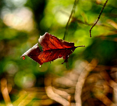Leafy Levitation
