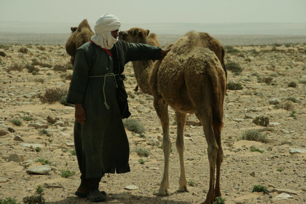 Sahraui