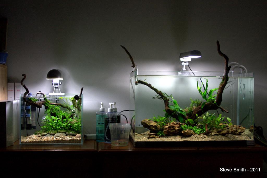 35cm nano shrimp tank aquascaping world forum for Night fishing light setup