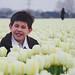 Flower Fields 花海 2011