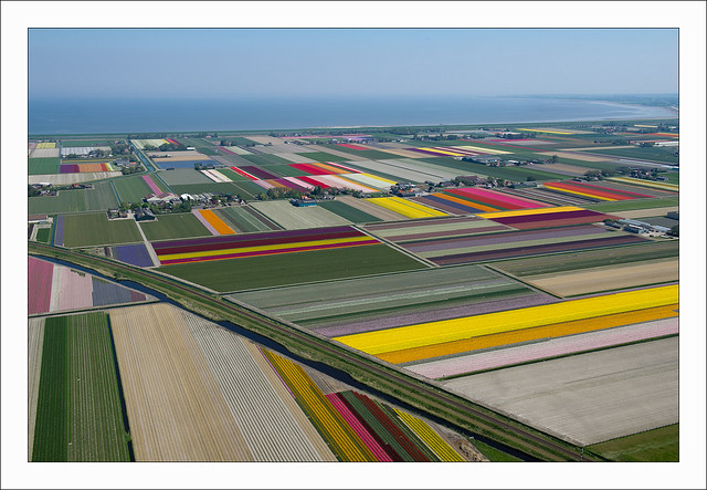 photo of tulip fields in the netherlands by normann szkop