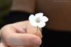 24. Pequeña flor