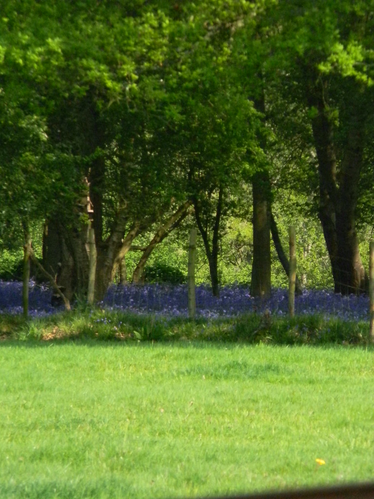 Distant Bluebells The bells are always bluer on the other side of the field. Frant to Tunbridge Wells