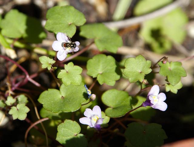 Violet20110526