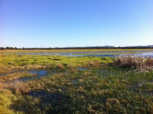 全球淡水濕地持續流失 經濟損失每年達2.7兆美元