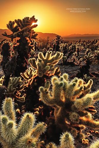 旅行 kang 风光 日出 美国 户外 摄影 色彩 加州 国家公园