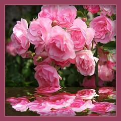 Colored Petals' Garden