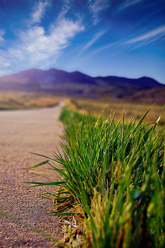 foothills texture grass landscape interesting colorado path rockymountains inspirational frontrange exciting bladeofgrass lowangle walkingpath shallowdepthoffield bladesofgrass arvadareservoir bikingpath tylerporter grasscloseup ralstoncreektrail