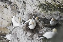 flightless bird(0.0), animal(1.0), suliformes(1.0), fauna(1.0), rock(1.0), bird(1.0), wildlife(1.0),