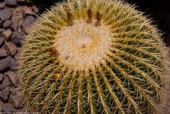 desert_botanical-32