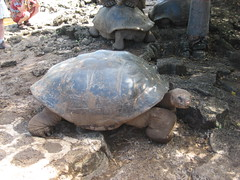 animal, turtle, reptile, marine biology, fauna, tortoise,