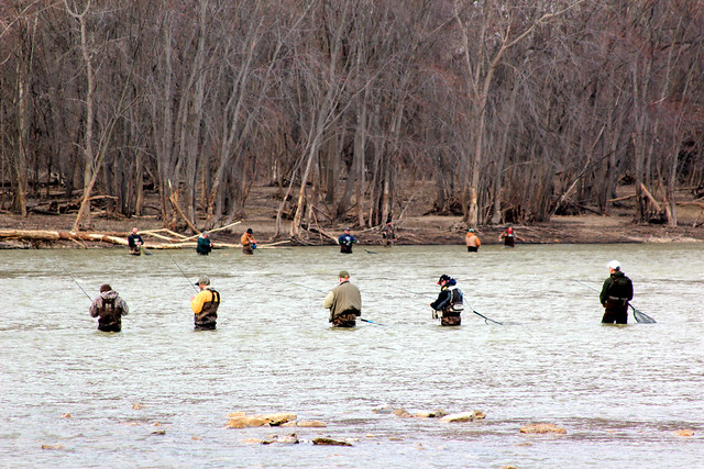 Early spring walleye fishing in the maumee river 3 for Maumee river fishing