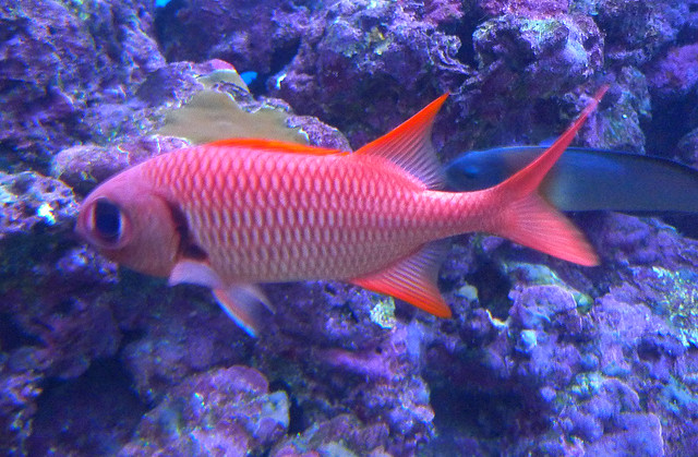 Photo for Hawaiian reef fish