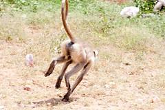 antelope(0.0), kangaroo(0.0), gazelle(0.0), animal(1.0), monkey(1.0), zoo(1.0), mammal(1.0), fauna(1.0), old world monkey(1.0), safari(1.0), wildlife(1.0),
