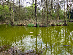 GREEN REFLECTIONS. 2