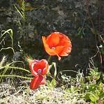 Alghelu Ruju Necropolis, Alghero, Sardinia