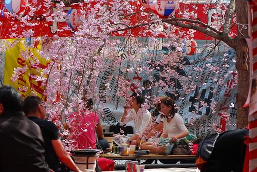 Hirano Shrine Hanami
