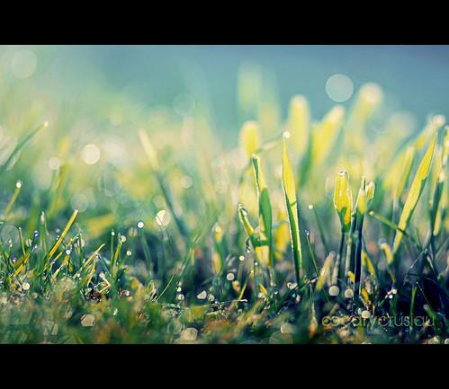 blur nature colors canon flickr colours dof bokeh 85mm canonef85mmf18usm
