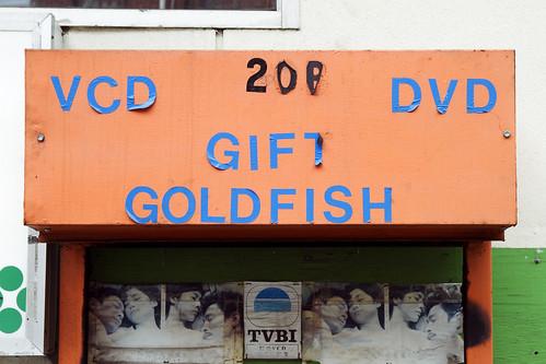 VCD DVD GIFT GOLDFISH