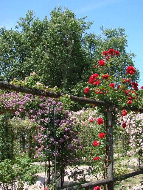 la roseraie de l 39 hay les roses flickr photo sharing. Black Bedroom Furniture Sets. Home Design Ideas