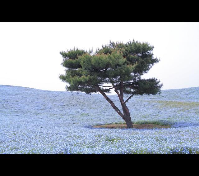 blue / ocean / tree