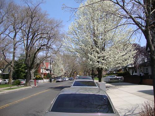 Spring in Brooklyn