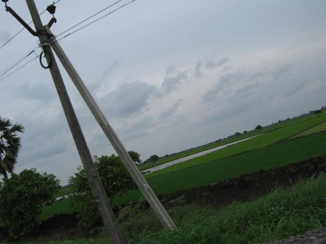 Paddy fields, Canon POWERSHOT A480