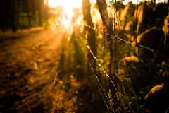 Wild Fence