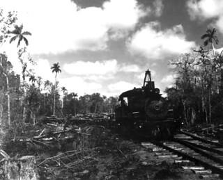 Trains pulling lumber: Copeland, Florida