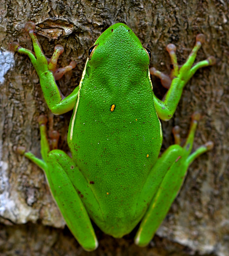 nature frog treefrog mercerarboretum