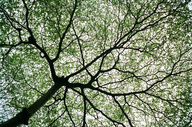 树干树枝与树叶