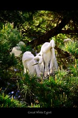 Herons and Egrets of 2011