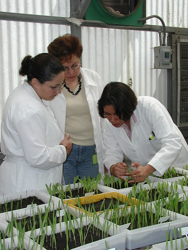 External inspectors make annual visit to CIMMYT's Seed Health Laboratory (SHL)