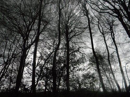 tree sillhouettes