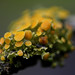Fruiting lichen by Evan Pickett
