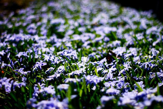 Springflowers 1